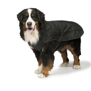 2 in 1 Harness Dog Coat